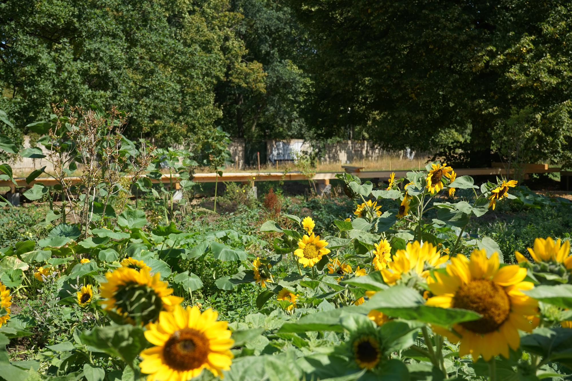 Gärtnerei  raumlabor » coop-campus – Die Gärtnerei